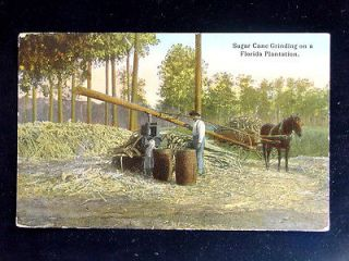 1910 Horse Drawn Sugar Cane Grinding Mill on Plantation in FL post