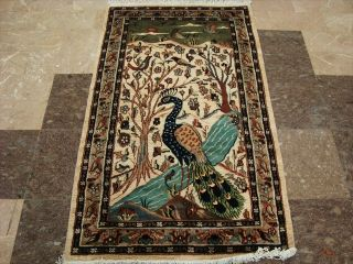 Beauty Peacock in Jungle Bird Fine Hand Knotted Rug Wool Silk Carpet