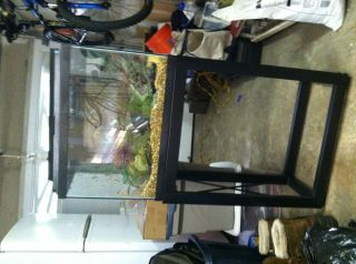 20 gallon fish tank, aquarium, decor, filter, plants, air pump