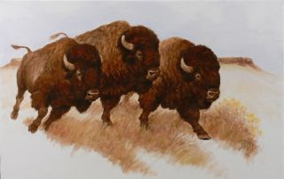 Western Art Running Buffalo Bulls Oil Painting by John T Jones