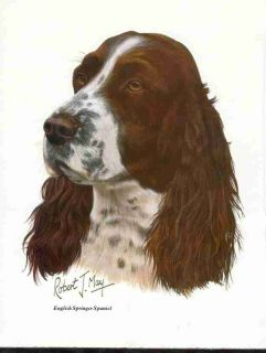 English Springer Spaniel Dog Mouse Pad by Robert J May