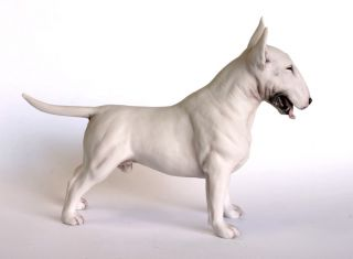 English Bull Terrier White stood sml chapman*