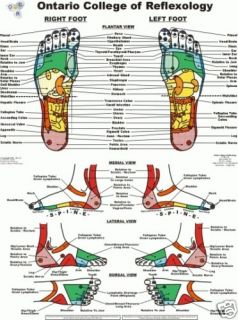 FOOT REFLEXOLOGY LAMINATED Extra Large CHART   MASSAGE